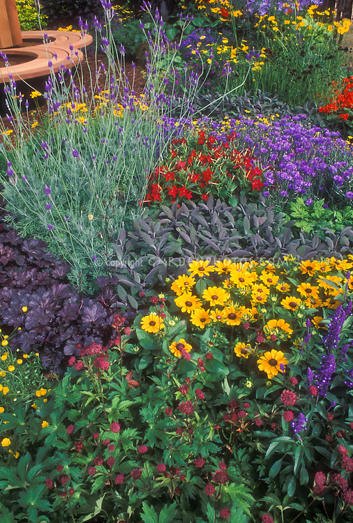 Colorful mixed garden with perennials, annuals, herbs, Rudbeckia black eyed Susan daisies, sage, astrantia, flowering tobacco Nicotiana, herb lavender Lavandula, bachelor buttons Centaurea cyanus, purple leaved Heuchera, Coreopsis
