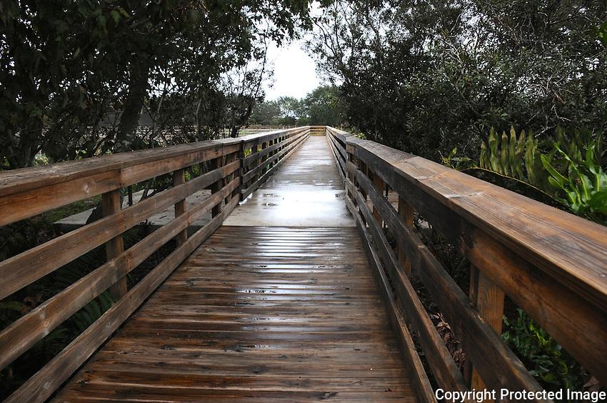 Heavy Rain saturates the boardwalk located at Wakodahatchee Wetlands, Delray Beach, Florida.