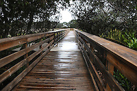 Heavy Rain saturates the boardwalk located at Wakodahatchee Wetlands, Delray Beach, Florida.
