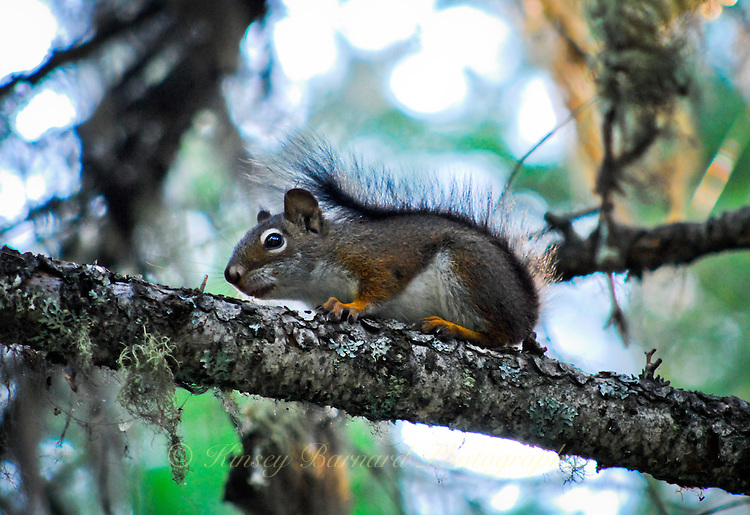 Tiny squirrel perched on a tree branch