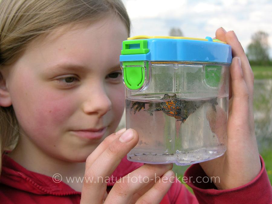 Mädchen, Kind beobachtet Rotbauchunke in Becherlupenglas, Rotbauch-Unke, Unke, Tieflandunke, Tiefland-Unke, Bombina bombina, fire-bellied toad