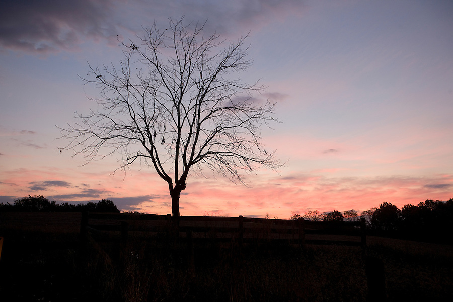An orange red sunset sillouhette a tree in Albemarle County. Photo/ Andrew Shurtleff