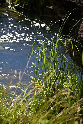 Am Fluß Narew wirtschaften verschiedene Bewohner ökologisch und innovativ. Sie schützen damit die wertvolle Flußlandschaft und verdienen gutes Geld. / At the river Narew many residents manage ecologically. They protect the river landscape and earn good money.