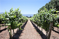 Sunstone Vineyards and Winery located 30 minutes north of Santa Barbara in the Santa Ynez Valley