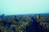 Hikers in wild flowers along a trail in Haleakala Crater