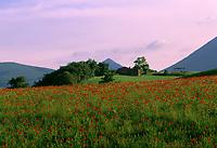 ITA, Italien, Marken, Landschaft mit Mohnfeld bei Camerino | ITA, Italy, Marche, landscape near Camerino