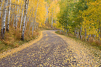 Autumn on Owl Creek Pass road.