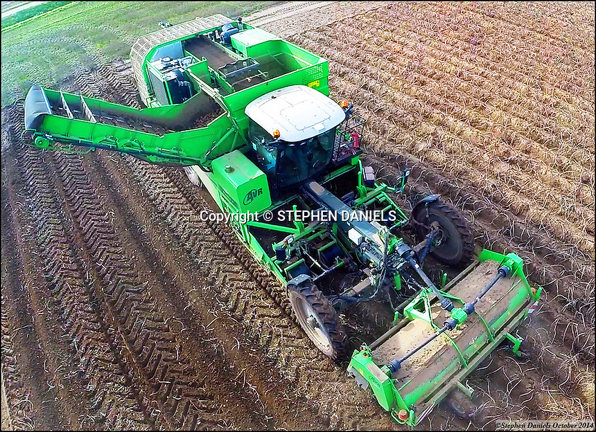 Photo by ©Stephen Daniels  22/10/2014<br /> AVR Potato Harvester, Fosdyke, Lincolnshire.