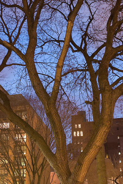 Illuminated Buildings on Union Square West at Dusk, viewed thru Bare Trees in Union Square Park, Upward View, Winter, New York City, New York State, USA