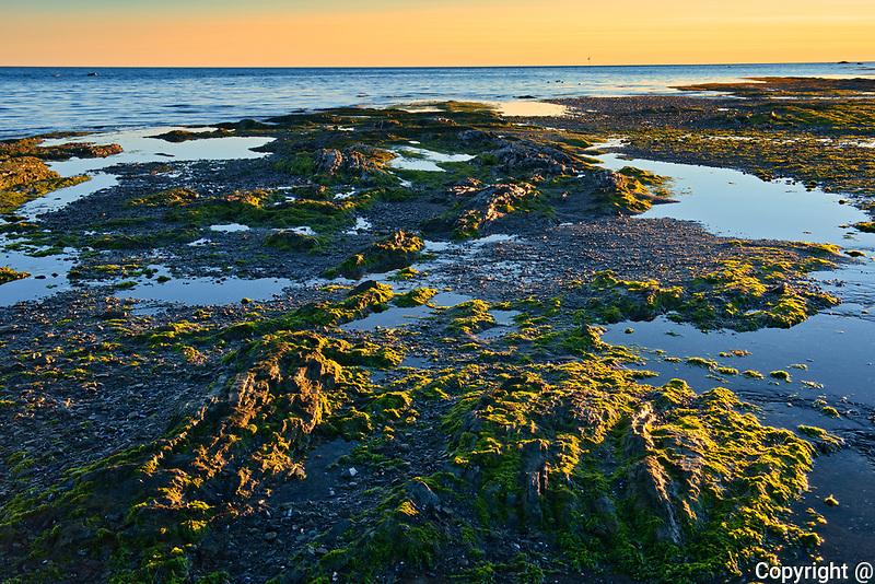 Sunset on rocky shore of St. Lawrence River at low tide<br />Baie-des-Sables, Quebec<br /> Baie-des-Sables<br />Quebec<br />Canada