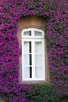 Purple bougainvillea surround this beautifully encased stone window in northern Spain