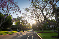 Jacaranda trees in bloom along Gilman Road on the campus of Occidental College, June 8, 2018.<br />