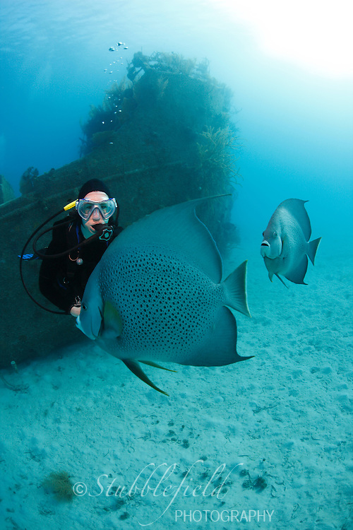 Scuba Diver admiring Gray Angelfish (Pomacanthus arcuatus) in front of the Prince Albert wreck in Roatan, Honduras.