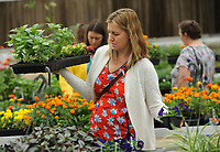 NWA Democrat-Gazette/ANDY SHUPE<br /> Amy Lee of Fayetteville shops Thursday, April 20, 2017, for flowering and garden plants at the Fayetteville High School plant sale in the school's greenhouse. The plants were grown by students in plant science and greenhouse management classes to benefit those courses and the school's National FFA Organization program.