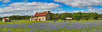 Loved that we got this panorama of this  great old stone farm house in the Texas hill country landscape with this field of bluebonnets and great sky. We had been trying to catch it with some nice texas skies and today it came through with the white clouds and blue sky it was almost perfect capture.  It completed our photos of this place over the many years we have taken pictures here.  This has become the place to go to capture bluebonnets and wildflowers in this rustic and rural landscape setting that are so popular with all who have a camera.