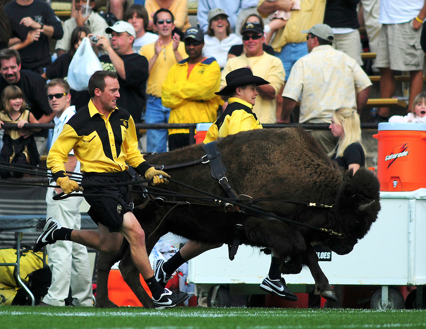 06 September 08: Colorado mascot Ralphie V is run around the field by handlers at halftime of a game against Eastern Washington. The Colorado Buffaloes defeated the Eastern Washington Eagles 31-24 at Folsom Field in Boulder, Colorado. FOR EDITORIAL USE ONLY