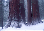 Winter snow at Mariposa Grove
