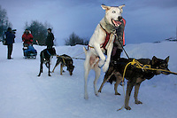 """Even though they are about to take their mandatory 24 hour layover, Bruce Lintons dog """"Juneau"""" is excited to keep going, at the Takotna checkpoint on Wednesday"""