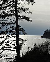 Third Beach, Olympic National Park, Washington.