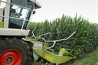 - Destruction of  corn fields in which  have been found percentages of OGM  (genetically modified) seeds; Busso Valerio farm,Tarantasca (Cuneo)....- Distruzione di campi di mais in cui sono state trovate percentuali di sementi OGM (geneticamente modificate), azienda Allevamento Frisone di Busso Valerio a  Tarantasca (Cuneo)