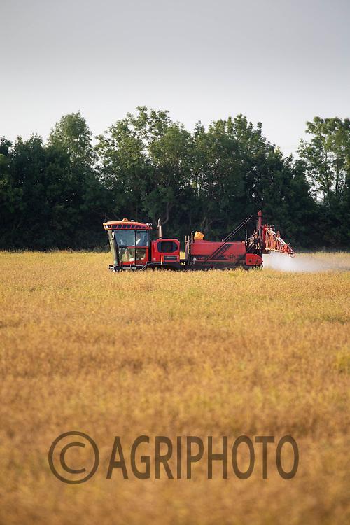22.6.2020 Desiccating oilseed rape <br /> ©Tim Scrivener Photographer 07850 303986<br />      ....Covering Agriculture In The UK.