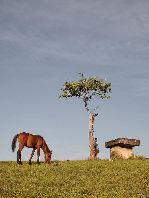 A Sumba horse eats grass near a tombstone at the field of Lamboya, Western Sumba.