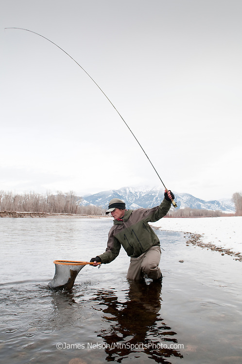 A fly fisherman brings a brown trout to the net during a winter day on the South Fork of the Snake River, Idaho.