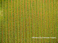 63801-10813 Alfalfa field after it's been cut and before it is baled-aerial Marion Co. IL