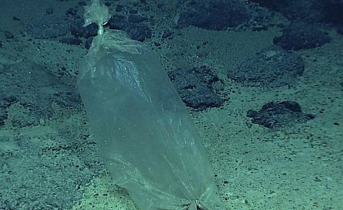 Plastic at the bottom of Mariana Trench