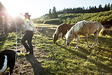 USA, Oregon, Willamette Valley, Clare Carver leads her horses at Big Table Farms Winery, Gaston