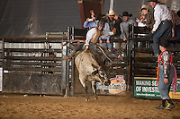 SEBRA - Raphine, VA - 4.12.2014 - Bulls and Actions
