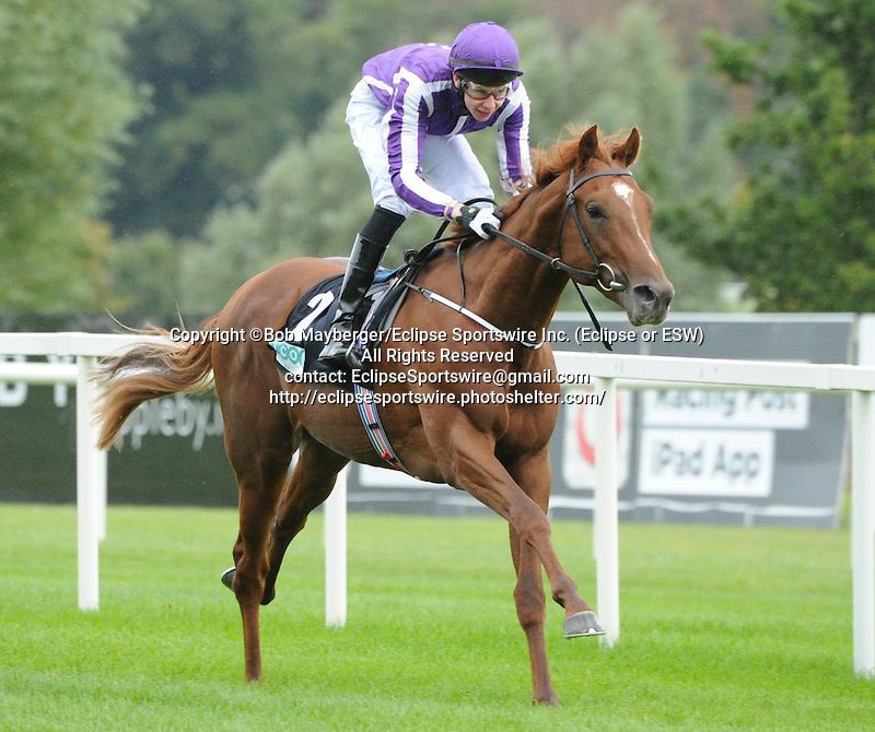 Australia (no. 2), ridden by Joseph O'Brien and trained by Aidan O'Brien, wins the group 3 Breeders' Cup Juvenile Turf Trial Stakes for two year olds on September 7, 2013 at Leopardstown Racecourse in Leopardstown, Dublin, Ireland.  (Bob Mayberger/Eclipse Sportswire)