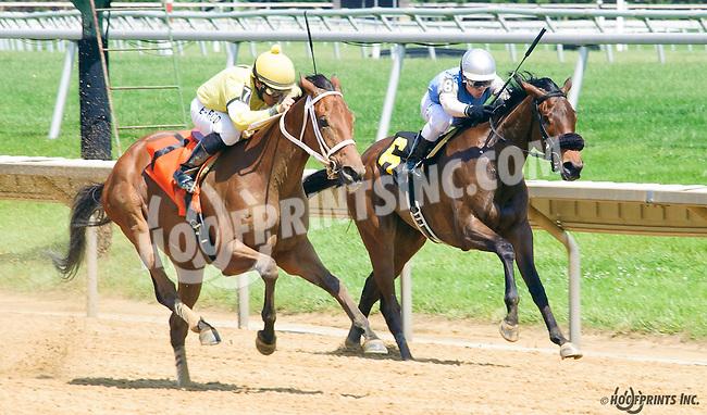 Sweet Sandy winning at Delaware Park on 6/1/16