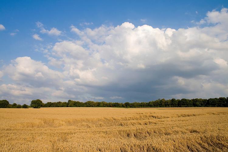 Europa, DEU, Deutschland, Nordrhein Westfalen, NRW, Ruhrgebiet, Ruhrtal, Muelheim, Agrarlandschaft, Getreidefeld, Himmel, Wolken, Kategorien und Themen, Landwirtschaft, Landwirtschaftlich, Agrar, Agrarwirtschaft, Erzeugung, Landwirtschaftliche Produkte, Wetter, Himmel, Wolken, Wolkenkunde, Wetterbeobachtung, Wetterelemente, Wetterlage, Wetterkunde, Witterung, Witterungsbedingungen, Wettererscheinungen, Meteorologie, Bauernregeln, Wettervorhersage, Wolkenfotografie, Wetterphaenomene, Wolkenklassifikation, Wolkenbilder, Wolkenfoto....[Fuer die Nutzung gelten die jeweils gueltigen Allgemeinen Liefer-und Geschaeftsbedingungen. Nutzung nur gegen Verwendungsmeldung und Nachweis. Download der AGB unter http://www.image-box.com oder werden auf Anfrage zugesendet. Freigabe ist vorher erforderlich. Jede Nutzung des Fotos ist honorarpflichtig gemaess derzeit gueltiger MFM Liste - Kontakt, Uwe Schmid-Fotografie, Duisburg, Tel. (+49).2065.677997, ..archiv@image-box.com, www.image-box.com]