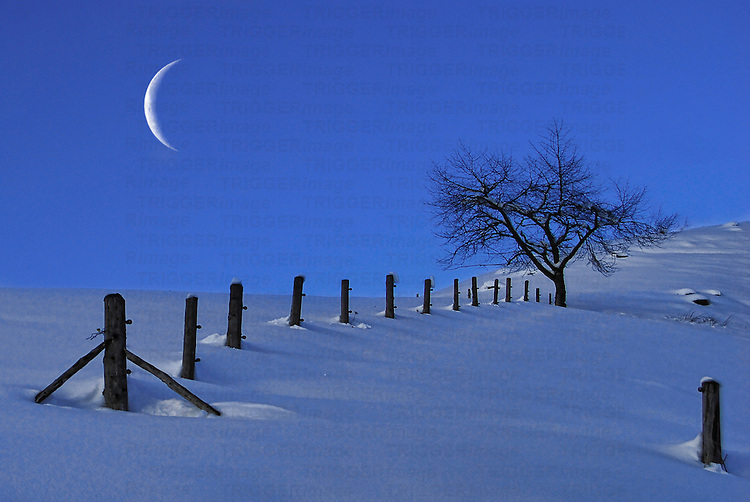 Moon Rising over a Snowy Landscape with a Single Tree and a Fence, Austria, Europe