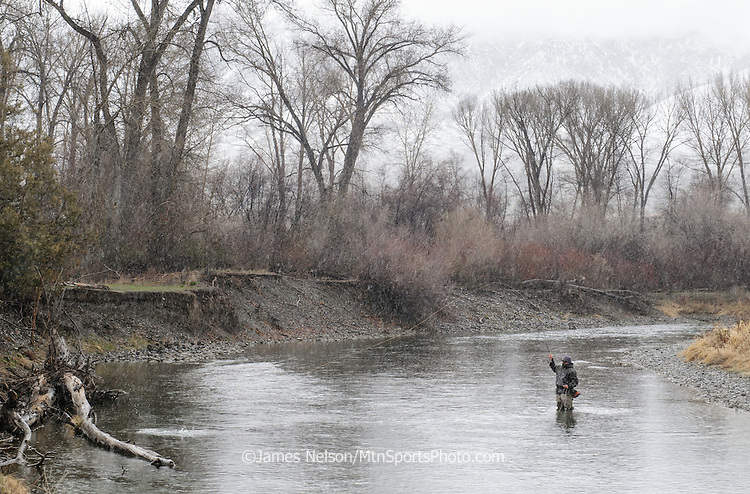 A fly fisherman plays a rainbow trout during a spring snowstorm on the Big Lost River, Idaho