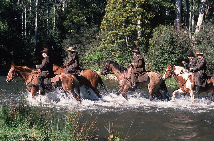 Mountain Cattlemen walking horses across river near Mt Buller, Snowy Mountains, Victoria