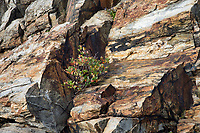 Rock Formation near Portland Head Lighthouse