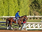 OCT 29: Breeders' Cup Turf Sprint entrant Final Frontier, trained by Thomas Albertrani,  gallops at Santa Anita Park in Arcadia, California on Oct 29, 2019. Evers/Eclipse Sportswire/Breeders' Cup