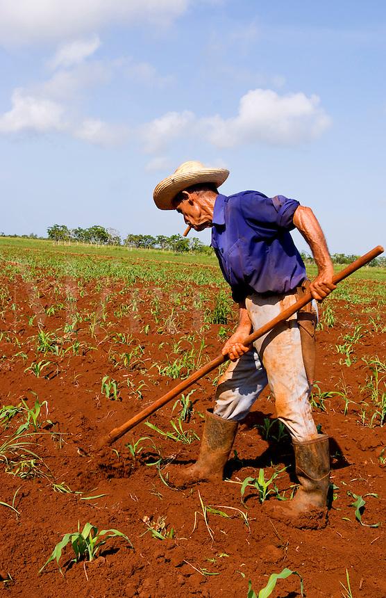 Graphic angle of simple farmer portait working fields in Havana Provence outdoors near Havana Cuba Habana
