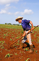 Graphic angle of simple farmer portait working fields in Havana Provence outdoors near Havana Cuba Habana