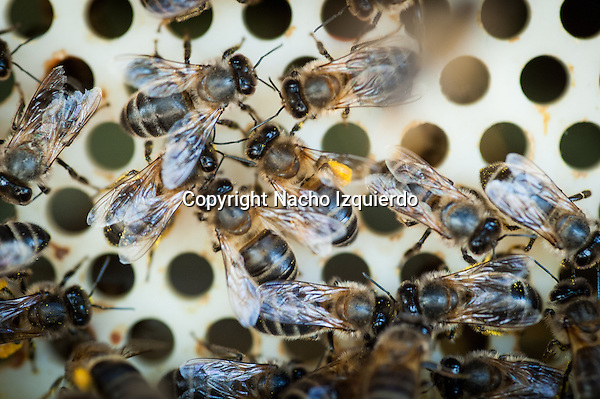Si las abejas se extinguen, los seres humanos se enfrentarán a numerosos desastres, como la erosión, la desertización y la desaparición de las plantas que nos sirven de alimento, tanto a nosotros como a los animales que criamos.