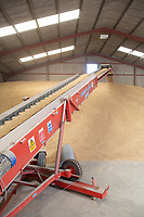Winter barley in an on farm flat floor grain store<br /> &copy;Tim Scrivener Photographer 07850 303986<br />      ....Covering Agriculture In The UK....