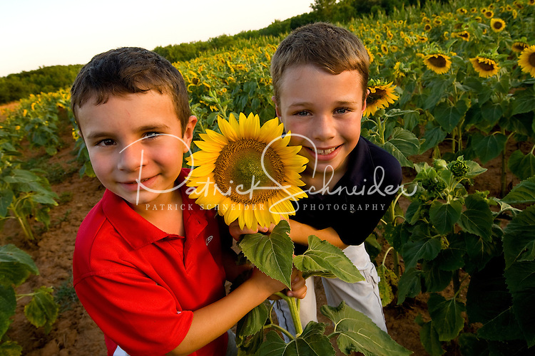 Two young boys pose within the expansive sunflower fields located within the Draper Tracts Wildlife Management Area in Brattonsville, SC. Model released.