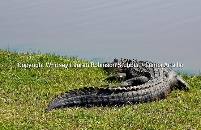 Wild Animals South Carolina Wildlife