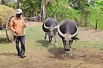 Man With Water Buffalo