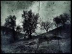 Golden Valley Open Ranch Space, i took these photos months after this area had a major fire, the rains did a great job turning the land lush again i I chose to make this photo BW and very dark. February 18, 2017. ©Fitzroy Barrett
