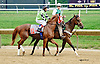Allstar before The Nick Shuk Memorial Stakes at Delaware Park racetrack on 7/10/14