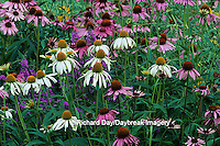 63821-09109 Purple & White Swan Coneflowers & Morden Pink Lythrum  Marion Co. IL