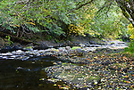 Wilson river, Tillamook State Forest, Oregon